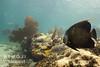 Bimini – život na útesech, foto: Atmoji ©WildQuest