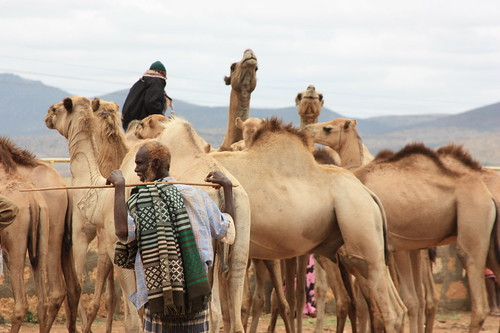 Camel Trader | by USAID_IMAGES