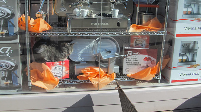 How much is that kitty in the window ? / One of these things is not like the others !