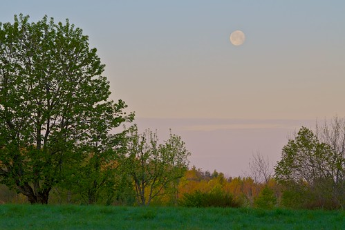 Early Morning Moon | by Distant Hill Gardens