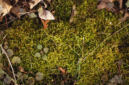 Spring Moss | by Simply Vintagegirl
