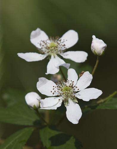 flower nature bloom wildflower 550d