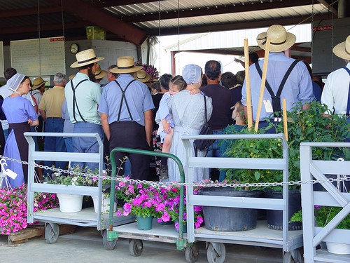 Flower Auction, Loveville Produce Auction, Loveville