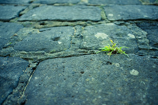 Grass out of Stone