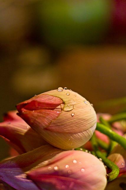 Lotus !!