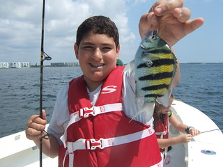 Brett catches a colorful Seargent Major!