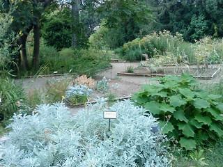 Le jardin des plantes de montpellier france the herb - Le jardin des plantes montpellier ...