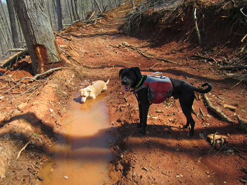 GreenWoods dogs taking a water break.