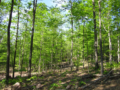 Selectively harvested forest surrounding Lot 2.