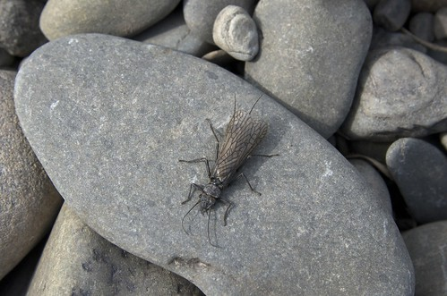 Stonefly, The Warren, Near Hay on Wye | by imaginedhorizons