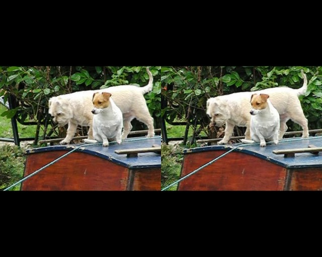 Two dogs on a boat - high speed 3d movie clip - crossview