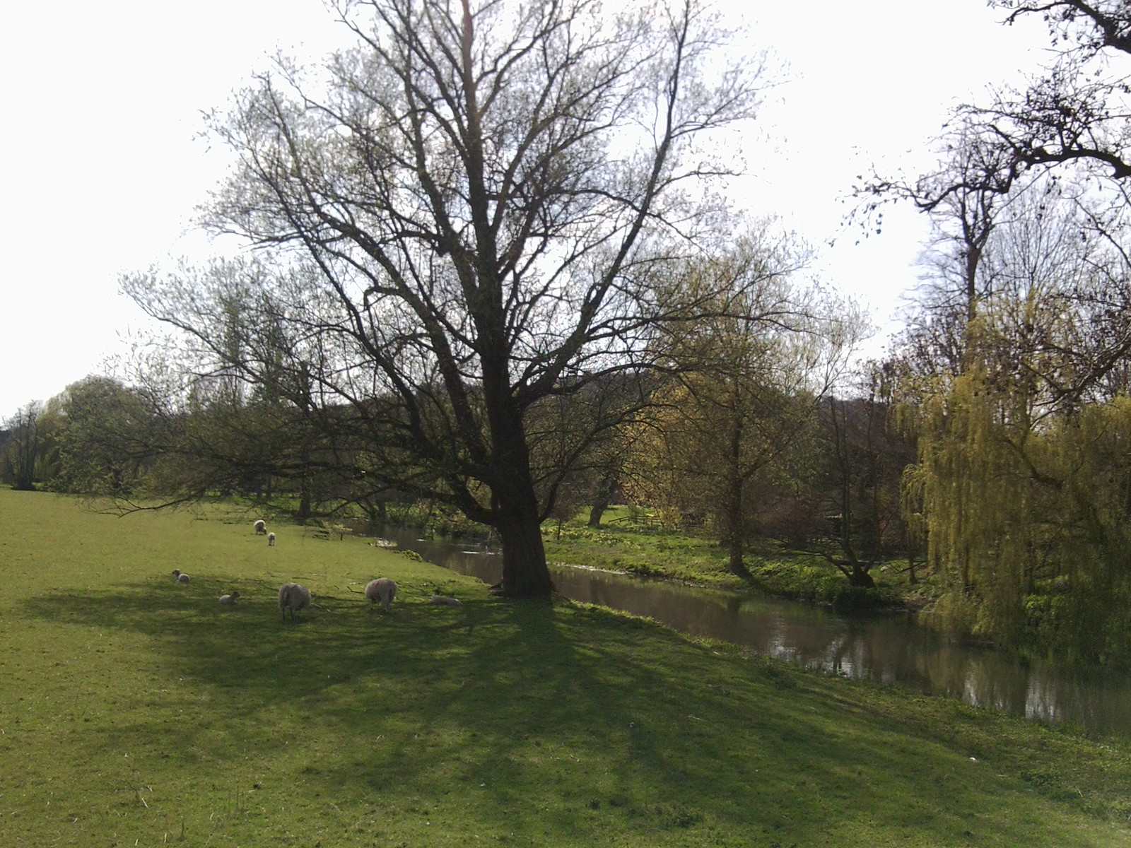 The Stour, Godmersham Park Chilham Circular