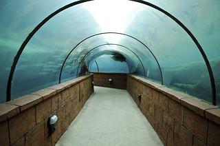 blue tunnel   by vl8189