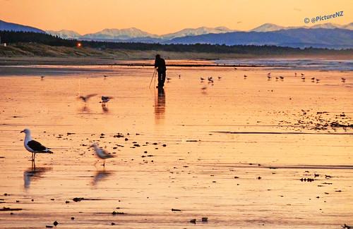 sea newzealand christchurch blur mountains alps sunrise dawn coast sand photographer gulls tripod canterbury southern shore nz southisland sunup daybreak ministryofawesome
