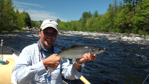 First West Branch salmon on a dryfly for the season | by Maine River Guides