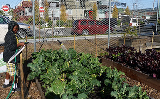 watering the beds [Northern California (under Organizing)] | by communities for a better environment2012