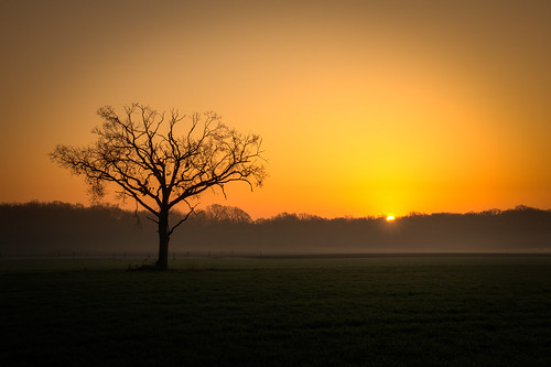camera winter sunrise germany landscape nikon year münster 2014 northrhinewestphalia d610 nikkorafs2485