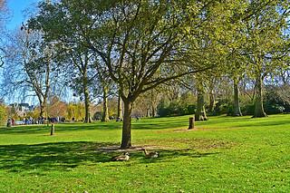 Ducks Under Tree Shade, St James's Park   by MrT HK