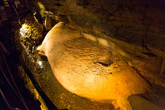 Howe Caverns - Howes Cave, NY - 2012, Apr - 13.jpg by sebastien.barre