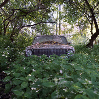 Ambush in the nettle | by Anton Novoselov