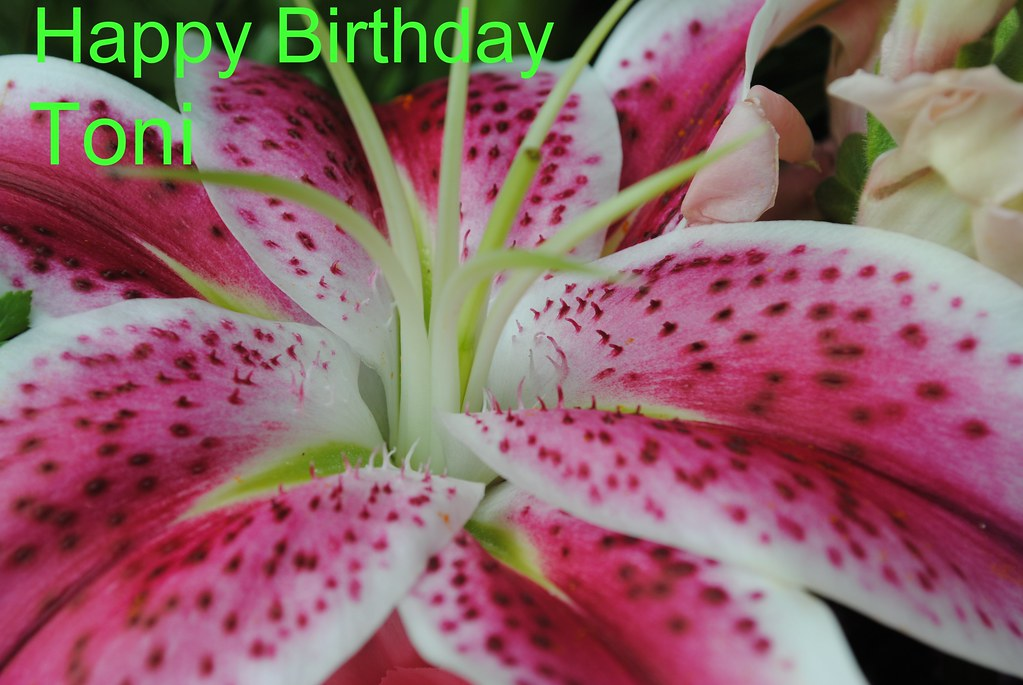 Happy Birthday To Our Beautiful Daughter Toni The Star Flickr