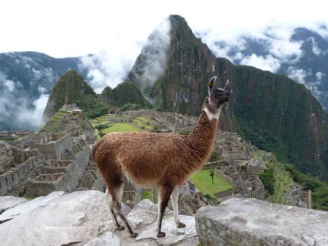 Ruinas de Machu Picchu (con una llama delante)