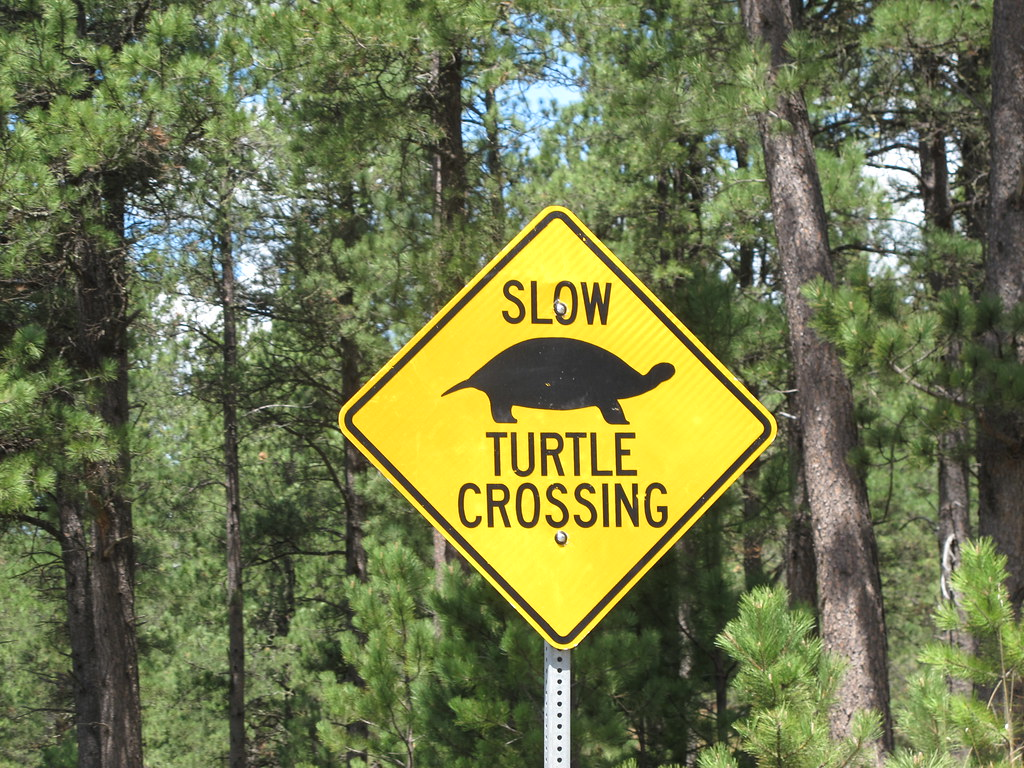 Slow Turtle Crossing >> South Dakota Slow Turtle Crossing Melissa Dunphy Flickr