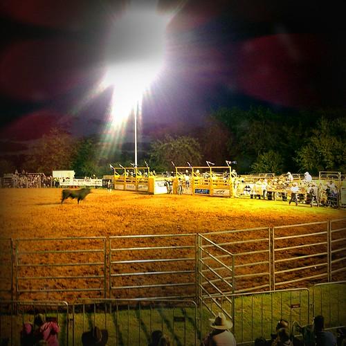 camden australia bull nsw newsouthwales rodeo 2012 farmshow countryshow camdenshow