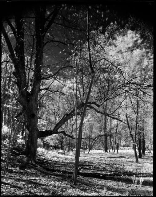 Efke IR Test, Litzenberg Park