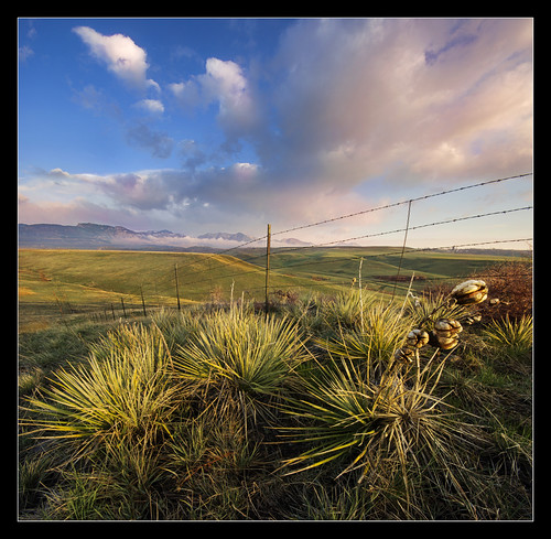 plants foothills sunrise landscape colorado colorful sony earlymorning bluesky professional rockymountains alpha lowclouds yucca barbedwirefence americanwest puffyclouds arvada pinkclouds verticalpanorama firstlight wildwildwest leyden a55 sigma1020 tylerporter vertorama