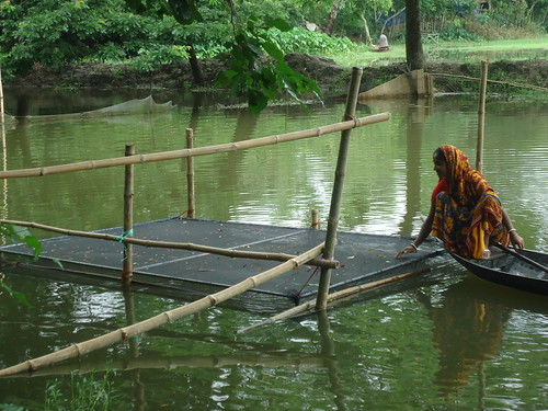 A Woman Checks On Her Tilapia Bangladesh Photo By Worldf