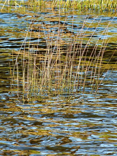 sunset plant reflection bird beach alabama daphne folliage gulfcoast waterplant mobilebay