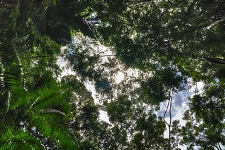 Jungle Canopy   by Nicolas Rénac