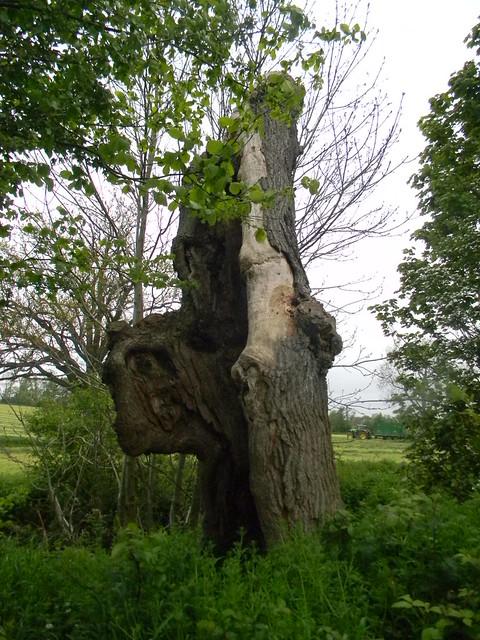 Big stump (turn right here) Cowden to Eridge