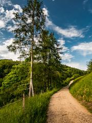 Feldweg von Saalhöhe Richtung Benkenjoch