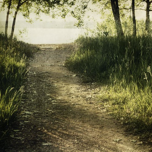 morning trees lake leaves canon square landscape sand glare shadows path grasses hdr textured filtered t1i applesandsisters
