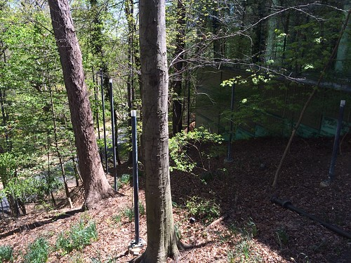 Light pole extension of the floor plate grid into the forest | by jntolva