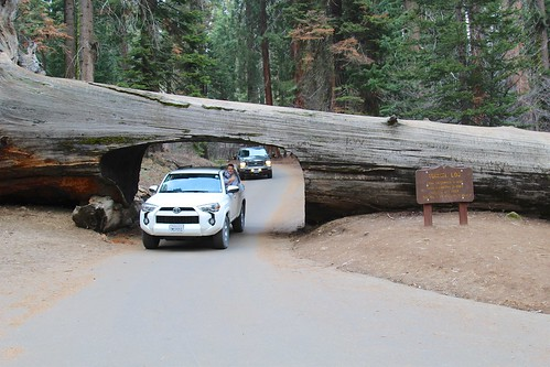 Vehicle through Tunnel Log