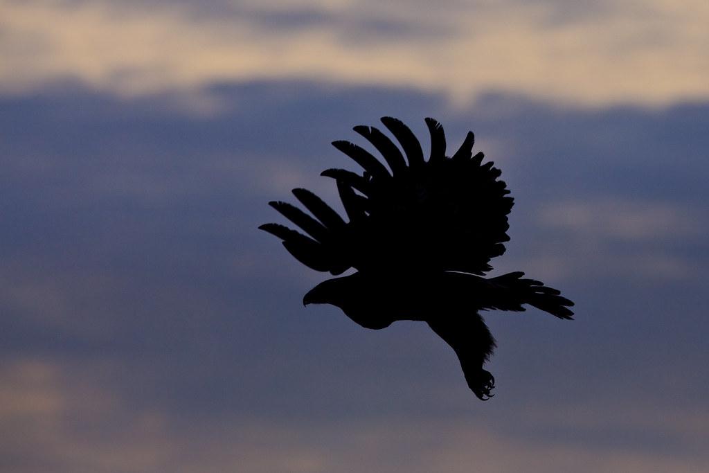 The Eagle's Flight