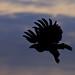 Image: The Eagle's Flight