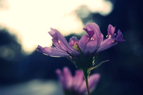sunset summer ontario canada flower garden sarnia discoveront