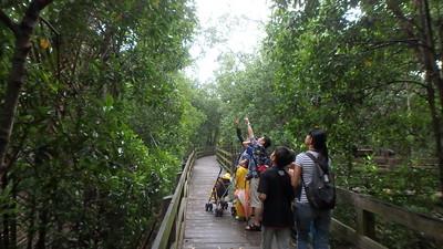 Families at Pasir Ris mangrove boardwalk