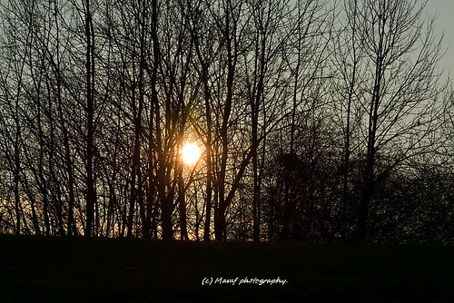 art britain beauty beautiful colour december england flickrcom flickr google googleimages gb greatbritain greatphotographers greatphoto image leeds mamfphotography mamf nikon north nikond7100 northernengland photography photo sunset sun trees tree uk unitedkingdom upnorth westyorkshire water yorkshire