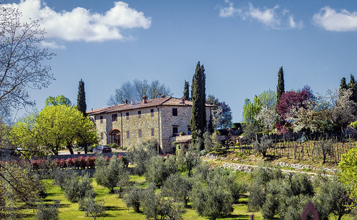 Olive Trees and Winery, Poggio Amorally, Chianti | by Ray in Manila