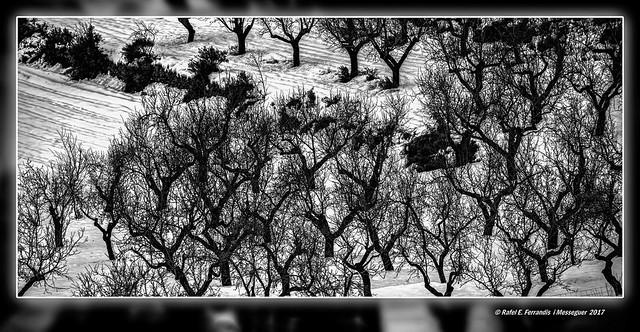 Arbres nus en la neu (Bare trees in snow) Caudiel, l'Alt Palància, Castelló, Spain