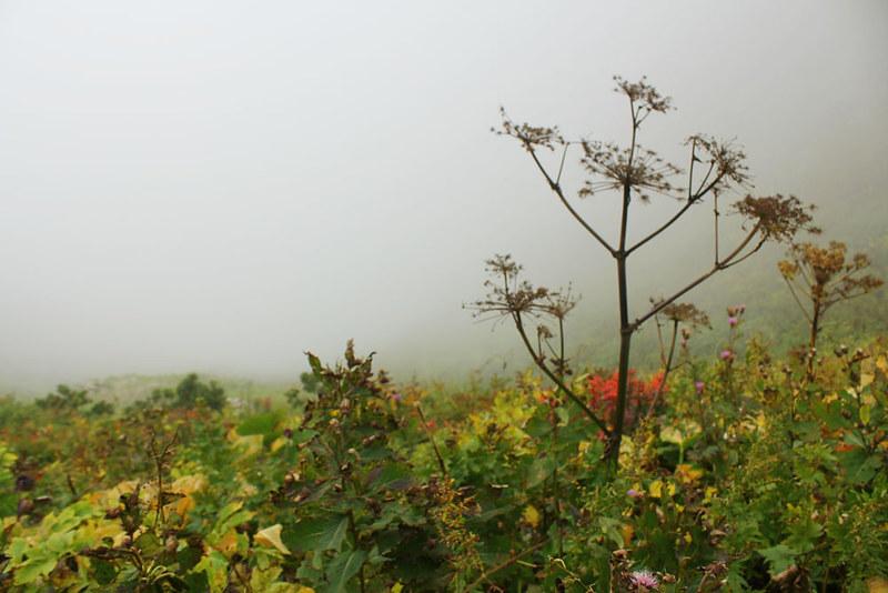 雨飾山_54