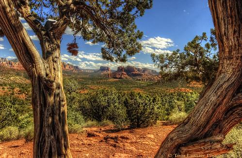 arizona usa tree clouds landscape nikon desert tomlussier tpslandscape