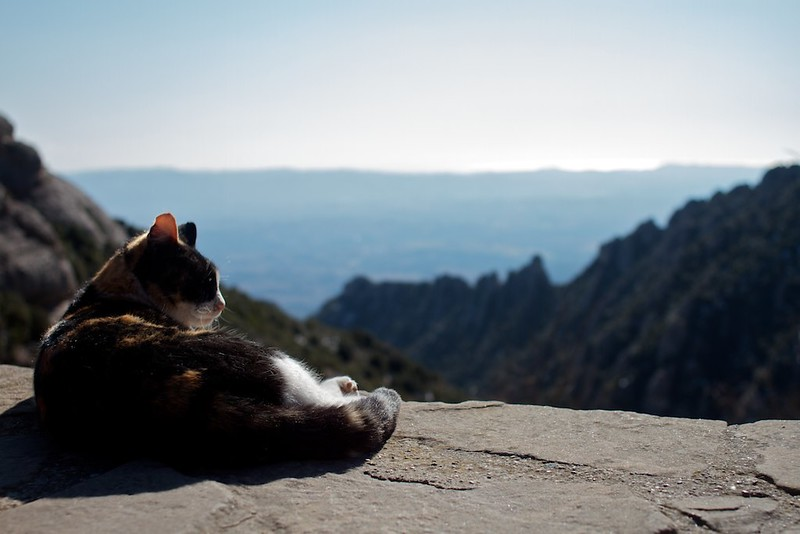 Cat with a View