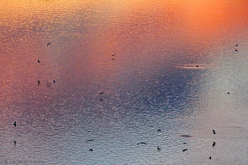 desktop sunset sun abstract bird texture water river flying colours gull surface mariannaarmata