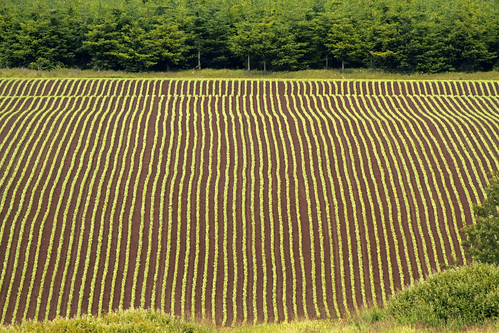 trees green vegetables field lines angel oregon landscape ian photography cut d farm images clear mount soil rows land vegetation agriculture agricultural gervais furrows sane mafiisfirst